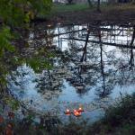 30.10.2015 Foto: Jan Teimer